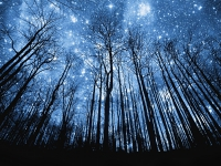 photo-manipulation-starry-night-in-forest-wallpaper.jpg