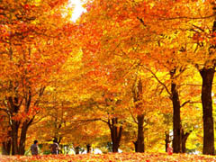 秋のデートスポット特集【関東版】 ~○○の秋を二人で制覇~
