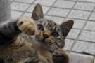 幸せを引き寄せる「猫ちゃん」