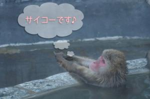 猿 温泉 サイコー